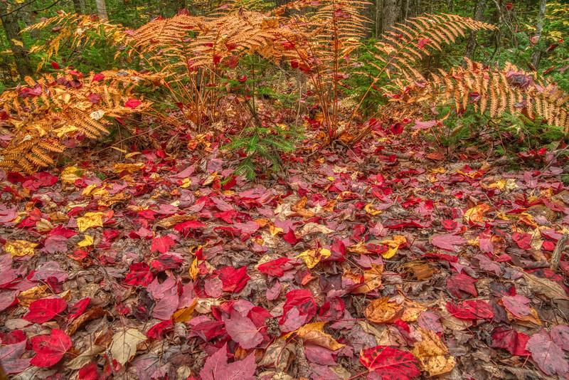 Maine Fall 2019-3.jpg