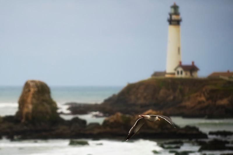 Pescadaro Gull & Lighthouse_DSC0777 - Version 2.jpg