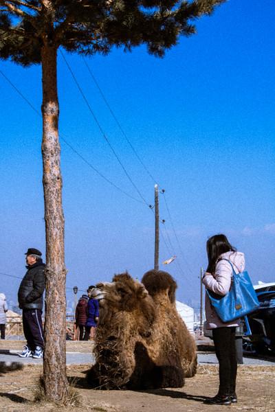 mongolianFebruary-1665.jpg