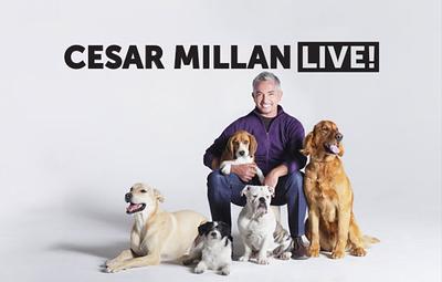 Cesar Millan Live!