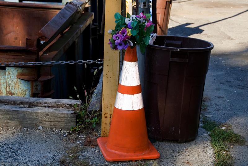 Flowers at the Dump.jpg