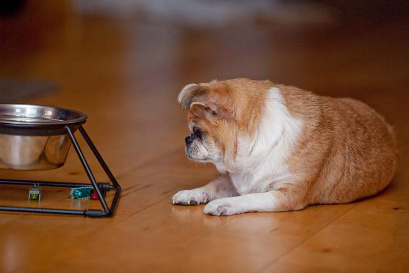 Dog-sushi-halloween-8.jpg