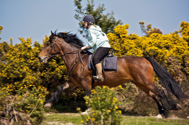 Horse Cantering By