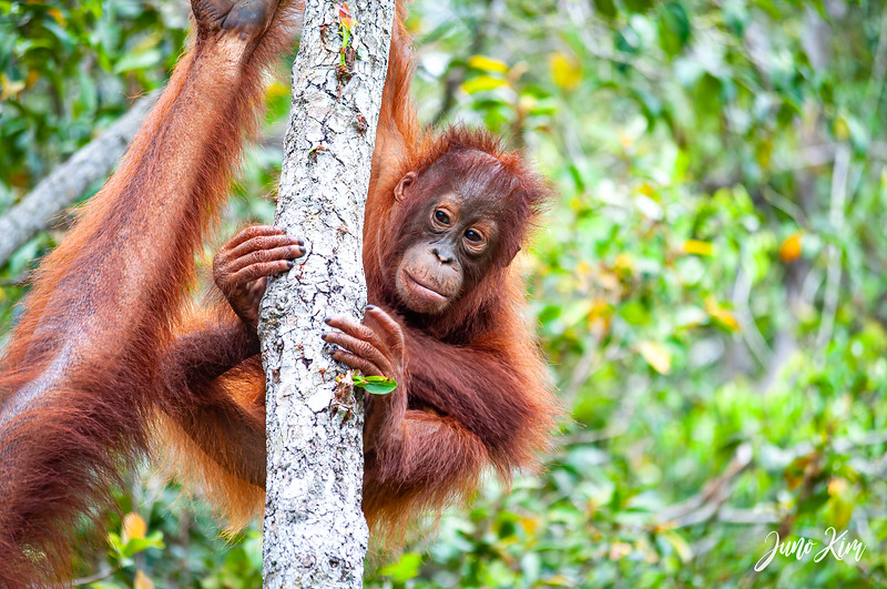 2012.10.07_Borneo_DSC_7077-Edit-Juno Kim.jpg