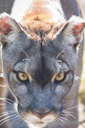Busch Wildlife Santuary