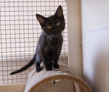 MZAR Kittens 20150725