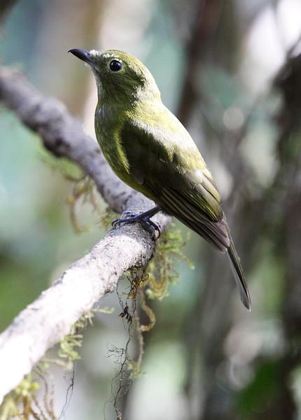 Piha Ecuador