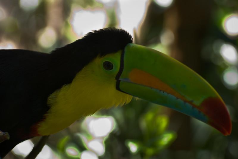 Costa Rica (111 of 104)