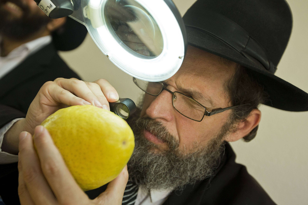 """. An Ultra-Orthodox Jewish man inspects an \""""Etrog\"""" (citron), one of four species used during the celebration of Sukkot, the feast of the Tabernacles, in the conservative central Israeli city of Bnei Brak, near Tel Aviv, on September 16, 2013. The Sukkot feast, to start on September 19, is a week-long holiday when people eat and sleep in makeshift booths in their gardens and commemorates the exodus of Jews from Egypt some 3200 years ago. JACK GUEZ/AFP/Getty Images"""