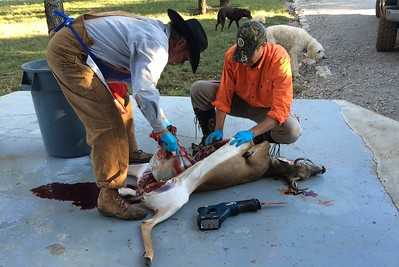 Vacation Star B Ranch - Trimble Bachelor Sunday Buck Pictures (11/8/2015)