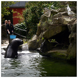 Edinburgh Zoo, May 2012