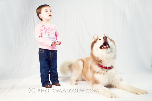 PetMed Pets - Holiday Mini Session
