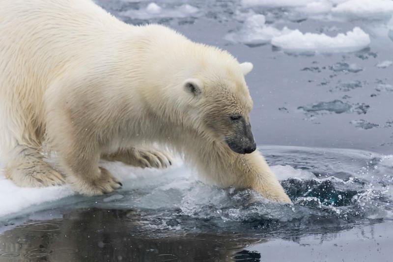Inspirato-Arctic_Expedition18-04-Russebukta-1459.jpg