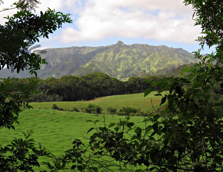 Kauai'10_S90_389.jpg