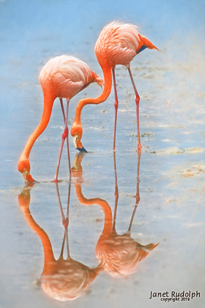 Flamingo 3a s.jpg