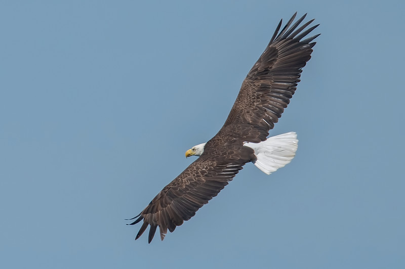 20190604Home Eagles 6-4-19DSC_4655.jpeg