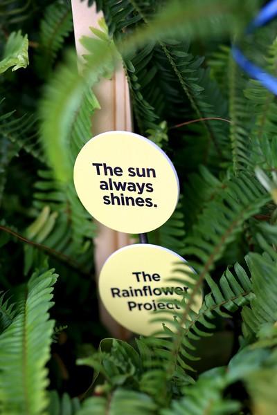 Rainflower Project 4P7A5148.jpg