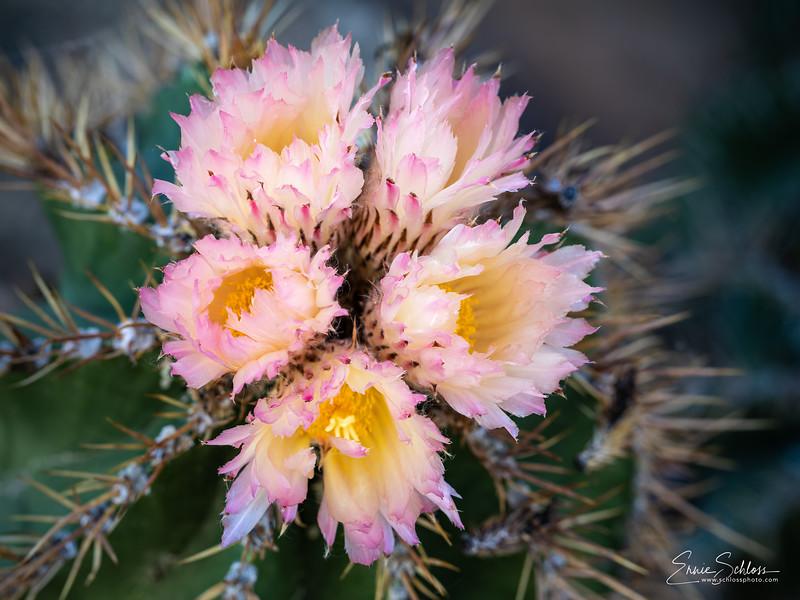 ASDM Flowers 4-25-2019f-.jpg