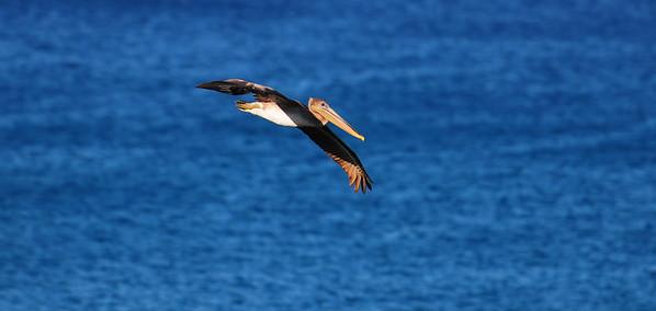 Cabo Birds 11.11