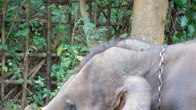 2013 Thailand Elephant Painting