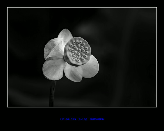 _MG_8538-ps-M.jpg
