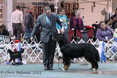 Best Puppy BMDCA 2013