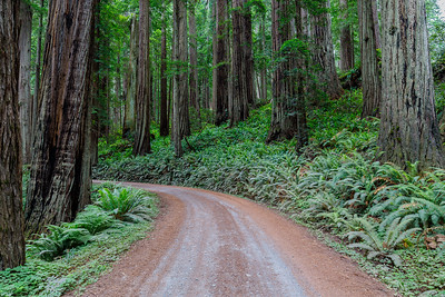 Redwood National Park (California)