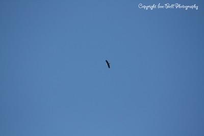 2012/2013 Winter Eagles