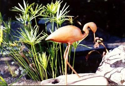 620_wading_bird.jpg