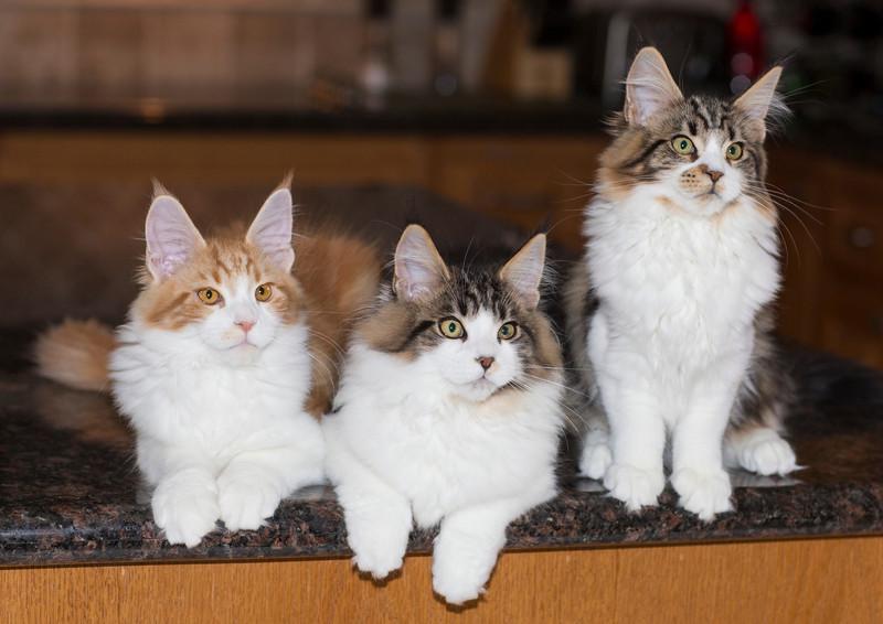 Kittens278.jpg