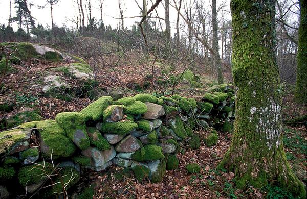 green- Sweeden.jpg