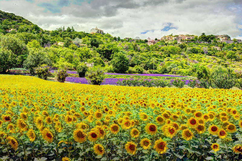 FranceSunflowersSiagnon&LavenderDSC_2929_30_31_fused.jpg
