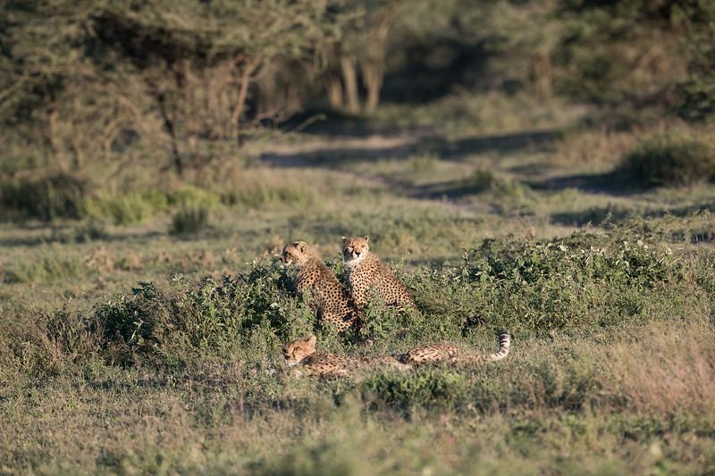 Tanzania_Feb_2018-139.jpg