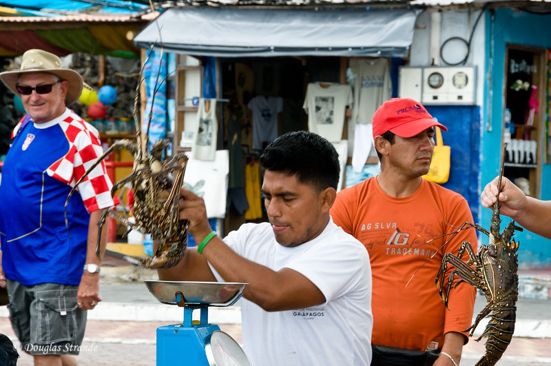 Local seller weighs a lobster at the fish market in Puerto Ayora on Santa Cruz Island