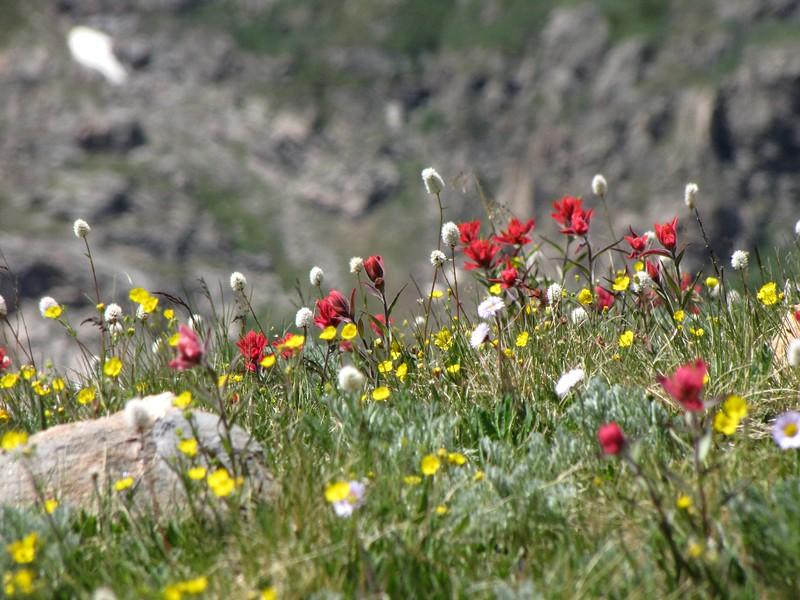 amh FLOWERS (1179).jpg