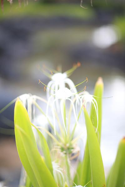 Kauai_D4_AM 065.jpg
