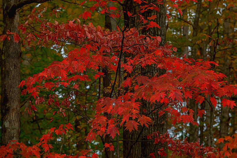 NC-AUTUMN TREES-0253-Edit.jpg