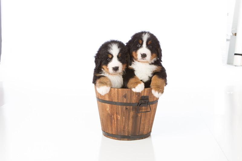 2013-Pearson Pups-Jun02-0470.jpg