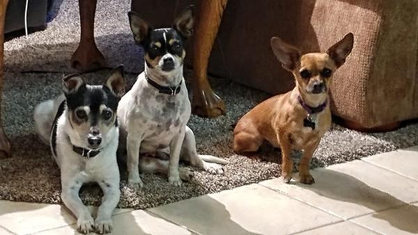 Ripley, Zoey, & Chica