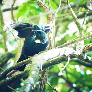 Zealandia Bird Life