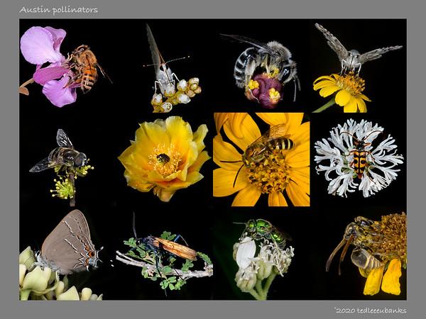 Biodiversity Posters