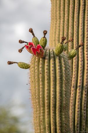 2015 Tucson
