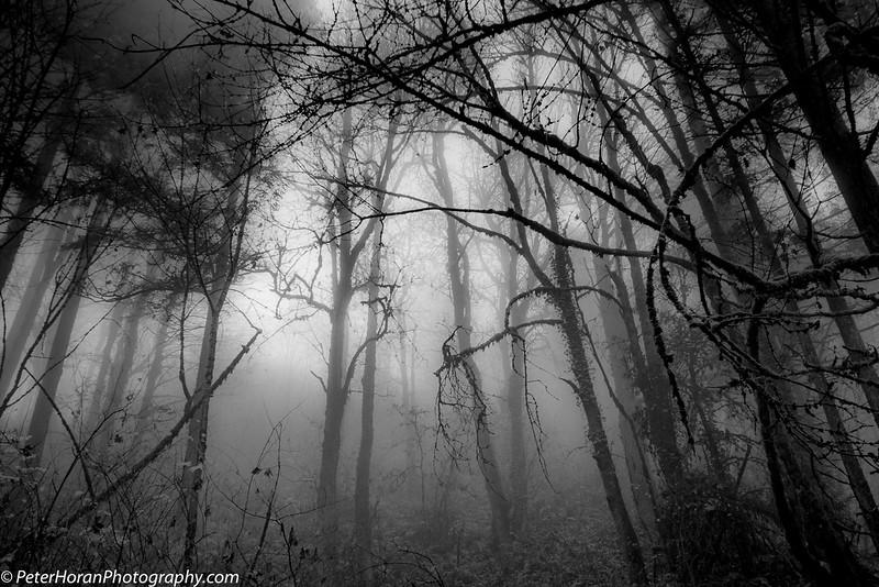 ghost-trees-2020-506-of-9_50649876832_o.jpg
