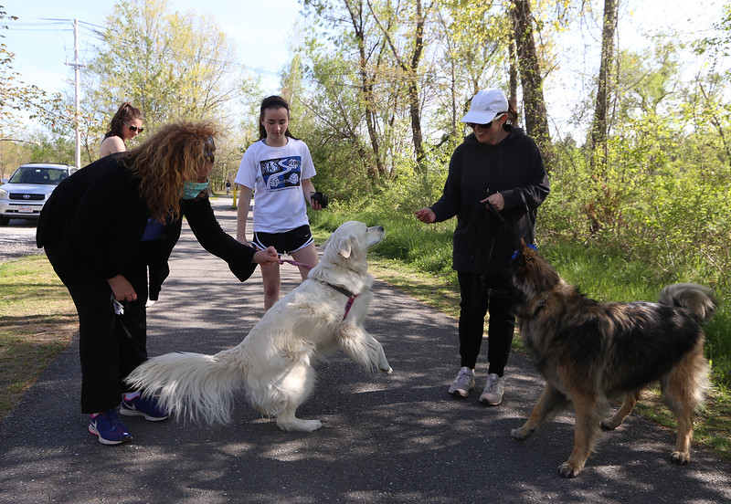 Clockwise from front left, Cheryl Shea of Groton, her daughter Katherine Shea, 16, and their longhaired German shepherd, Holly, and their friends Caroline Keegan, 15, and her mother Nancy Keegan of Groton, with their European retriever, Bella, head out for a walk on the Nashua River Rail Trail in Groton. (SUN/Julia Malakie)