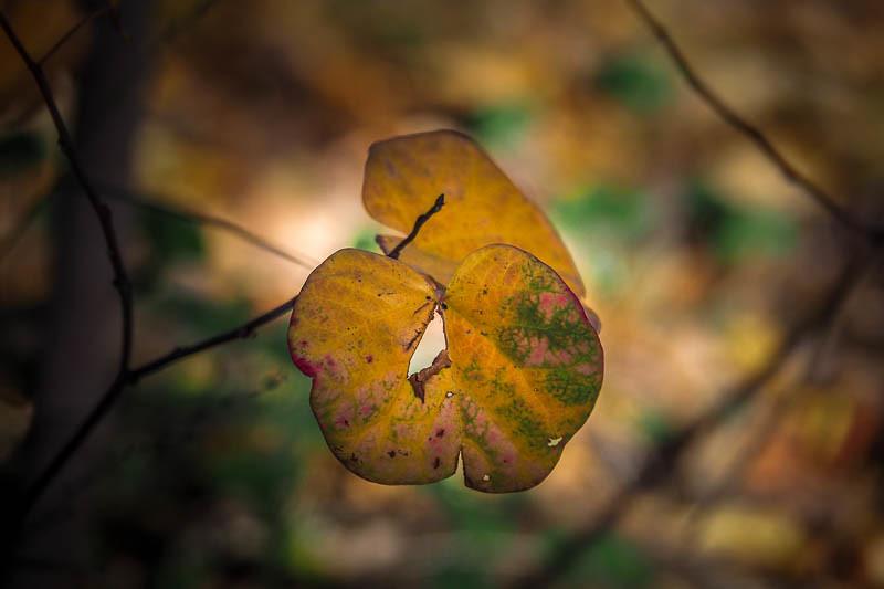 December 12 - Last vestiges of autumn.jpg