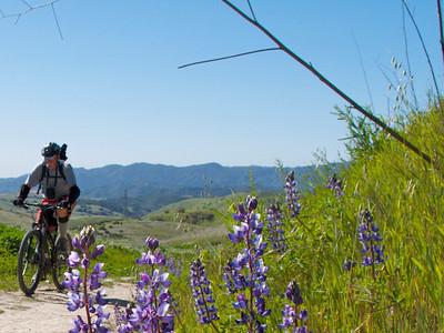 Cheeseboro Canyon, Simi Hills, Santa Monica Mountains National Recreation Area