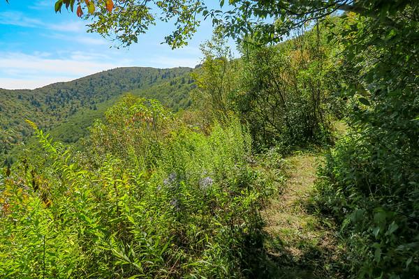 Fork Mountain Trail (#109)