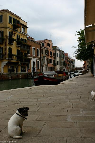 VeniceIMG_0748.jpg