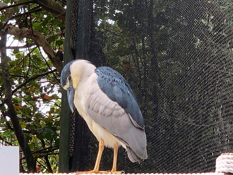 1_12_21 Bird Sanctuary on Madeira Beach.jpg