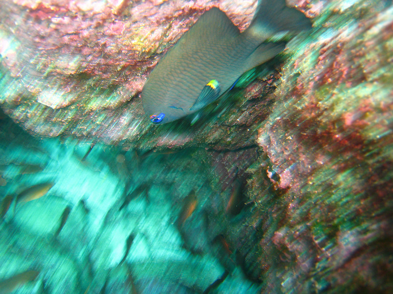Diving in the Galapagos (98 of 392)